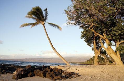 beach-725998_1280