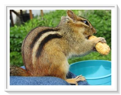 skamper with peanut