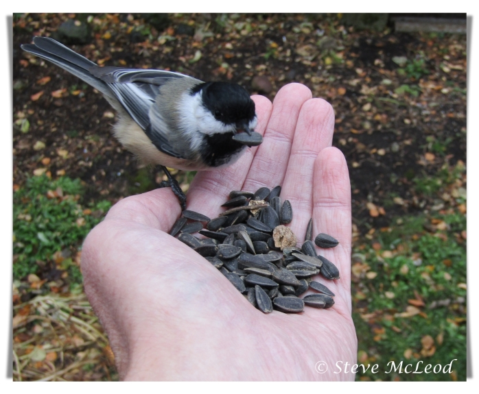 chickadee on hand 1