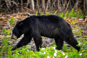 bear-4105531_1920
