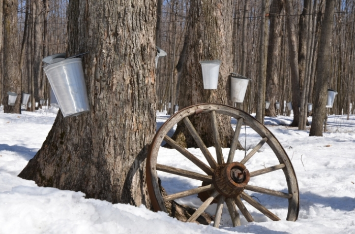 maple-syrup-1169896_1920