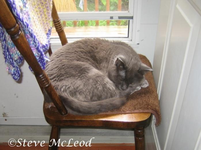 Muffin enjoying a snooze