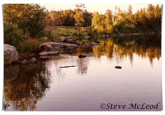 nixon lake, beaver1