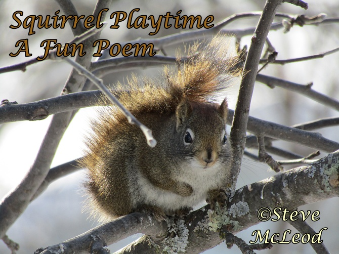 Squirrel Playtime…A Fun Poem.